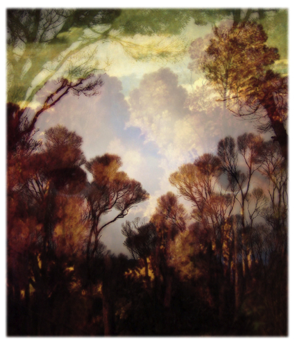 Sophia Szilagyi Into the woods (2007) pigment print on archival rag