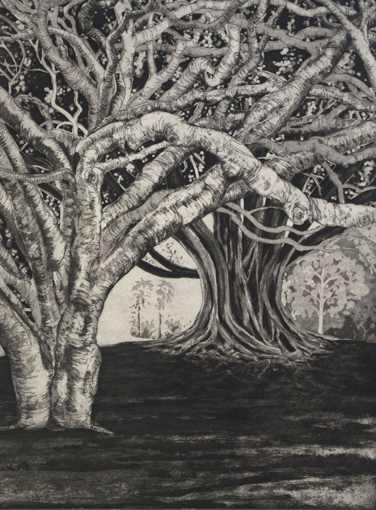 Rachael Ness, Tangled 2013, etching, edition of 20 60 x 45 cm