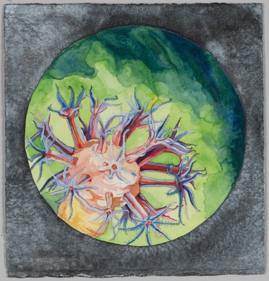Nicole Macdonald Endless Midnight II, 2012, watercolour, 32 x 31 cm