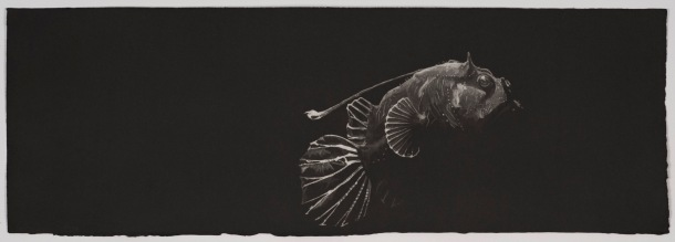 Nicole Macdonald Lurking #2, 2010, intaglio print, edition of 10, 36 x 86 cm