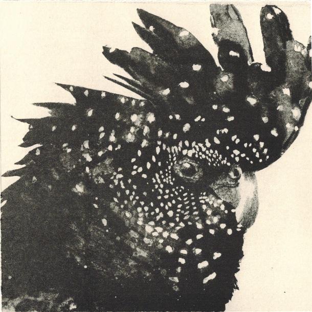 Kerrie Cleverdon, Black Cockatoo, 2015, lithograph, 15 x 15 cm