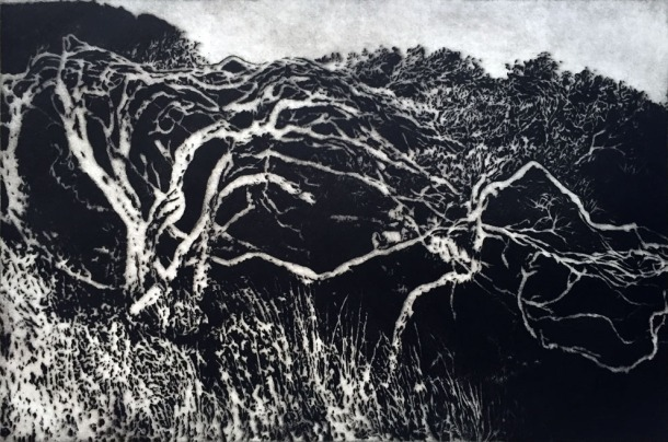 Carmel Wallace, Cape Bridgewater, 1993, drypoint, 39.5 x 59.5 cm. In the collection of Glenelg Shire Council.